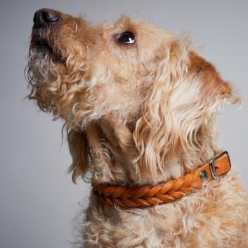 Natürliches Hundehalsband