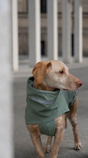 Heller Hund mit Regenmantel