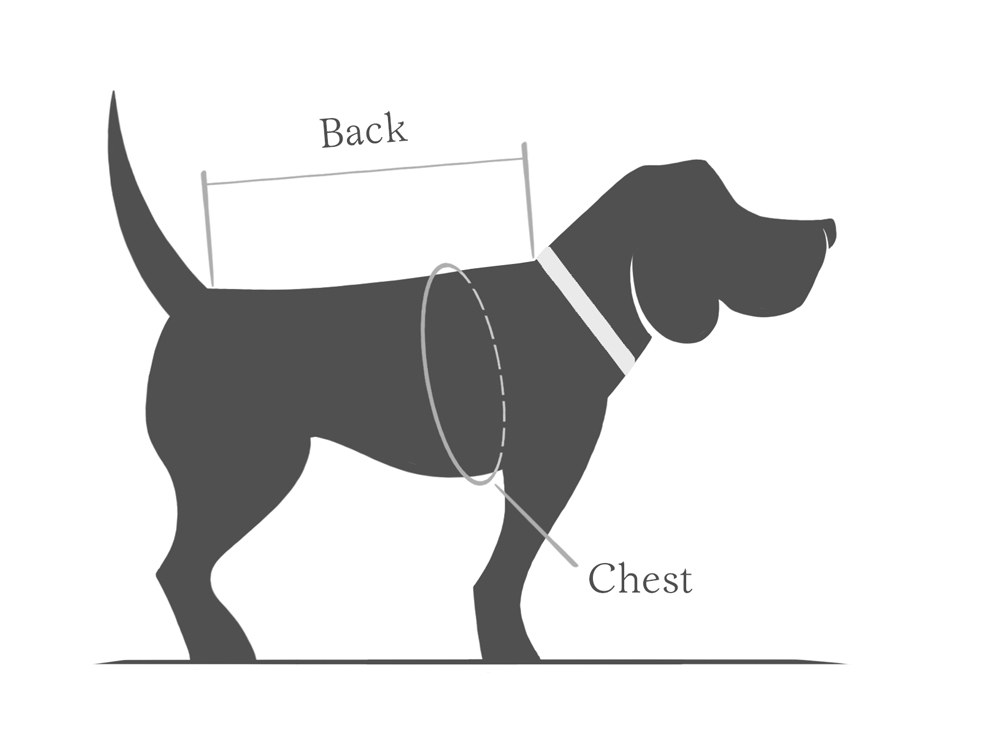 how to measure your dog in order to find a well fitting dog coat