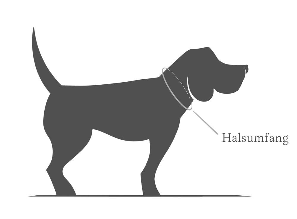 Wie finde ich die richtige Größe Hundehalsband